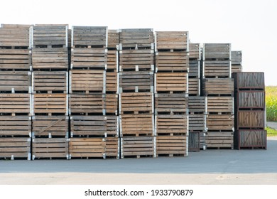 rows of wooden crates, crates and pallets for storing and transporting fruits and vegetables in the warehouse. production warehouse on the territory of the agro-industrial complex.