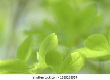 Royal azalea background as a background Closeup of green leaf with blurred foliage in the mountains, the background is in the distant hues with a blue hue and a neutral hue Natural green plants, ecolo