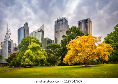 Royal Botanical Garden, Sydney, Australia: October 31, 2105: View of Sydney CBD from the Royal Botanical Garden with a golden tree in the foreground.