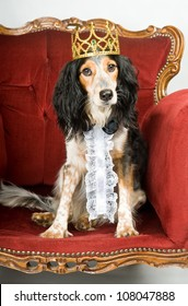 Royal dog: mixed breed dog with crown sitting in a red velvet sofa