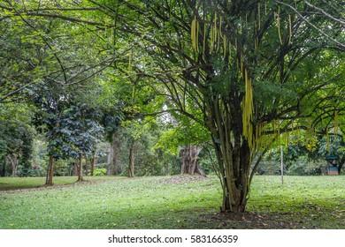 Royal Gardens of Peradenia