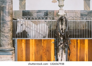 Royal Stable in Denmark, the city of Copenhagen in the territory of Christiansborg Slot. Old stable with white horses in stalls.