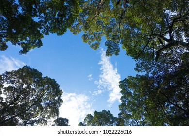 Royalty high quality free stock image of  green forest. Tree with green leaves and sun light. Bottom view background. View of green tree from bottom up. Look up under the tree