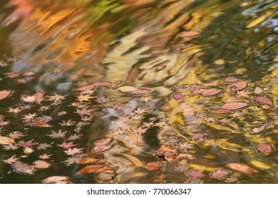Royalty high quality free stock image of autumn reflections on the pond, Japan