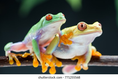Royalty high quality free stock image of colourful frog