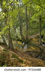 Roztocze National Park. Poland