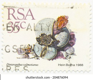 RSA - CIRCA 1988: A stamp printed in RSA shows Dinteranthus wilmotianus painted by Hein Botha, circa 1988