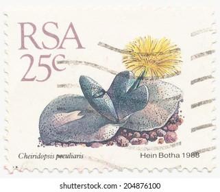 RSA - CIRCA 1988: A stamp printed in RSA shows Cheiridopsis peculiaris painted by Hein Botha, circa 1988