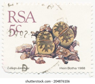 RSA - CIRCA 1988: A stamp printed in RSA shows Lithops dorotheae painted by Hein Botha, circa 1988