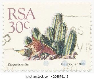 RSA - CIRCA 1988: A stamp printed in RSA shows Tavaresia barklyi painted by Hein Botha, circa 1988