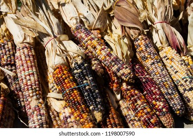 Rubber banded Indian corn at an Indiana farmers market