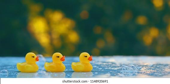 Rubber duck. three small toy yellow duck on natural background. concept of summer season, swimming, childhood. soft selective focus.