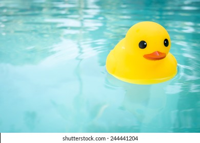 rubber ducky in a swimming pool
