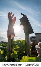 Rubber gloves hanging in the farm