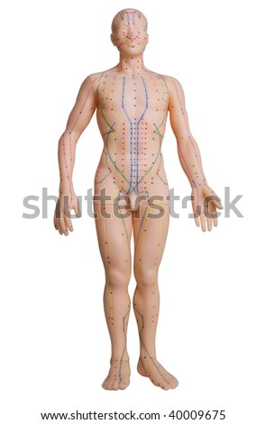 Rubber Mannequin Massage Pressure Points Stock Photo (Edit Now ...