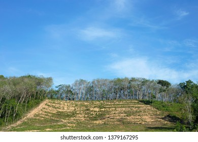 Rubber plantation on hill in countryside farm of Thailand