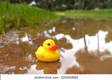 Rubber toy duck