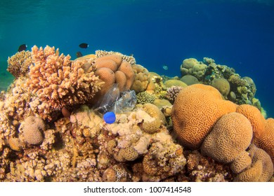 Rubbish plastic bottle thrown away ends up underwater on a coral reef