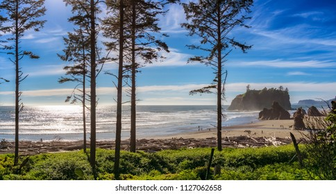 Ruby Beach landscape with some silhouetted conifers in the foreground on a sunny day, Olympic National Park, Washington state, USA.