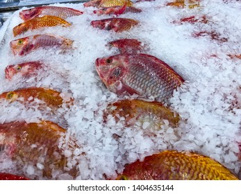 Ruby Fish Images, Stock Photos & Vectors   Shutterstock
