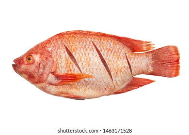 Ruby red fish to clean full body isolated on white background for cooking