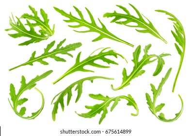 Rucola or arugula leaves isolated on white background. Big collection