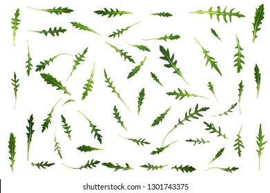 Rucola. Green fresh arugula leaf isolated on white background. Top view. Flat lay pattern . Healthy food concept.