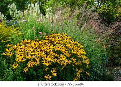 Rudbeckia and Grasses in Autumn- The Picton Garden- Worcester