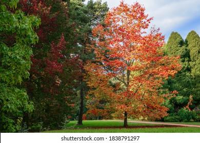 Ruddy Luscious Autumn Orange & Bright