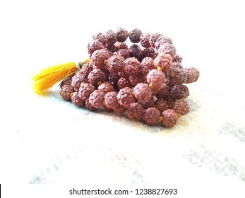 A rudraksha is the seed of the Eliocarpus ganitrus tree and plays an important