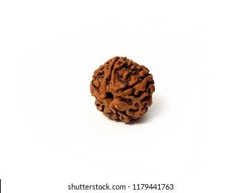 Rudraksha seed isolated on white background