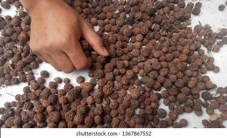 Rudraksha seeds isolated
