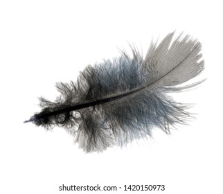 Ruffled fluffy feather isolated on white background