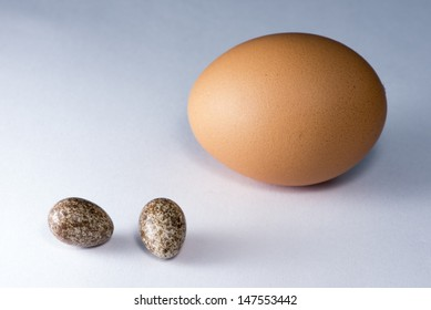 Rufous Hornero eggs next to a hen's one in order to compare sizes.