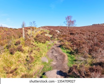A rugged footpath leads up hill, between tall, bare Silver Birch trees in the Derbyshire Peak District.