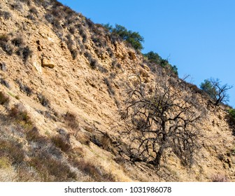 rugged steep dirt hillside with hardy tree in the Santa Monica Mountains of California