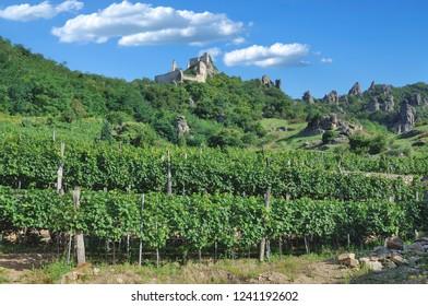 Ruin of Duernstein Castle in Vineyard,Danube River,Wachau Valley,lower Austria