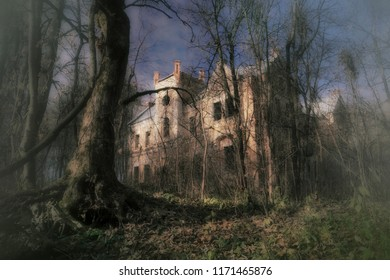 Ruined castle in the forest