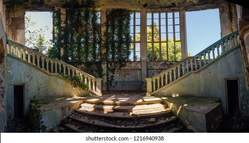 Ruined mansion interior overgrown by plants Overgrown by ivy windows and old staircase. Nature and abandoned architecture, green post-apocalyptic concept.