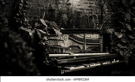 ruined Piano,black and white photo.
