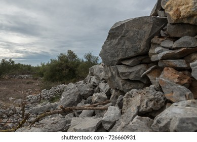 A ruined wall in an olive tree field.