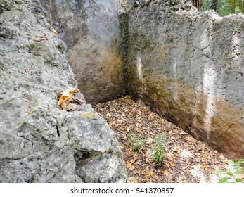 Ruins of ancient Gedi (Gede). Swahili town in Kenya near Malindi. Eastern Africa