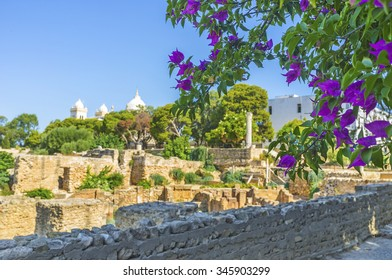 The ruins of Carthage surrounded by lash coniferous forest and scenic gardens with many flowers, Tunisia.
