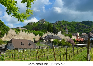 The ruins of Dürnstein Castle in Austria on top of a hill, with the walls of the town (including a tower) below. Houses are next to the wall, and a vineyard is in the foreground. The sky is overcast.