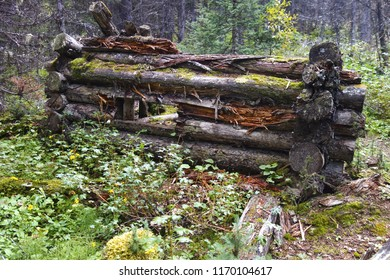 Ruins of old log cabin in forest hiking trail from bygone days of Kananaskis Country, Canadian Rocky Mountains