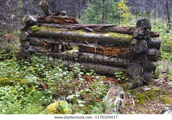 Ruins Old Log Cabin Forest Hiking Stock Photo (Edit Now