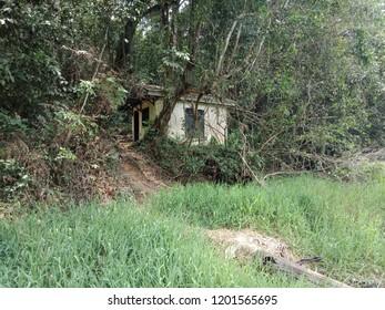 Rumah dalam hutan