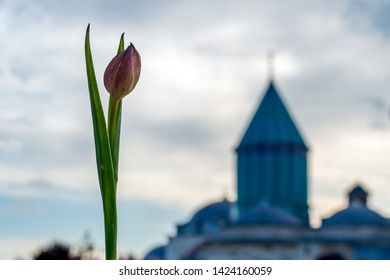 Rumi museum and tulip in Konya