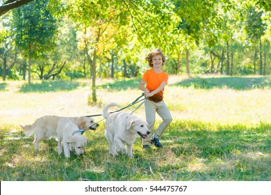 Run of three pets and one boy in the park with a lot of juicy grass. Little child holds a dog-lead and looks in the camera with spread smile in motion.