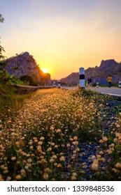Runner on flower field in sunset sky